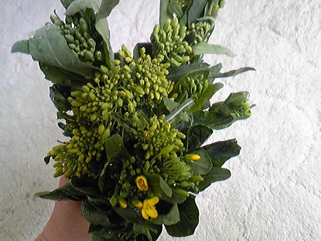 今日の菜花束